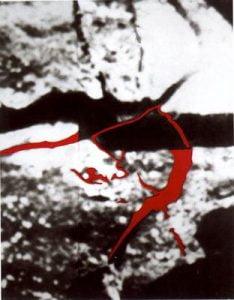 1996. Árbol-color.